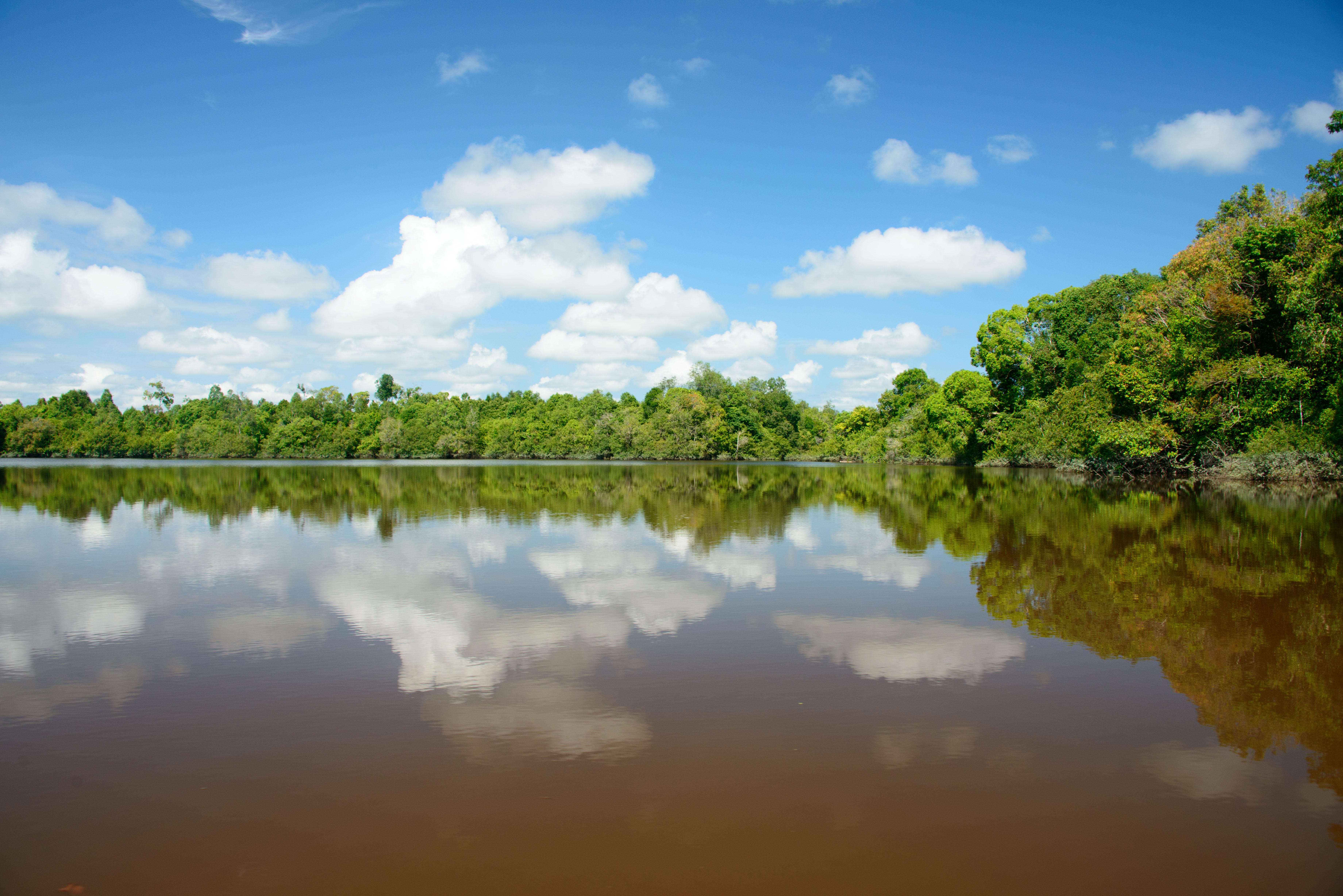 black_lake_water_kalaweit
