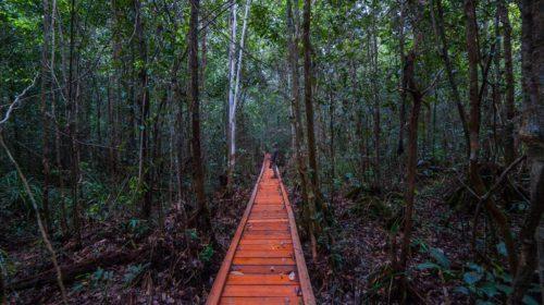Sebangau National Park At Sungai Koran Adventure